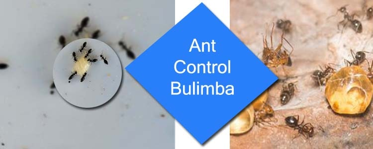 Ant Control Bulimba