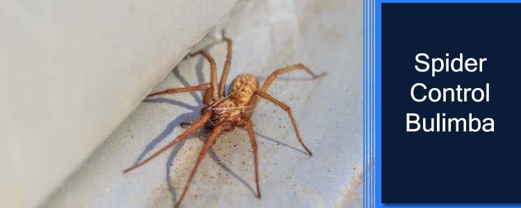 Spider Control Bulimba