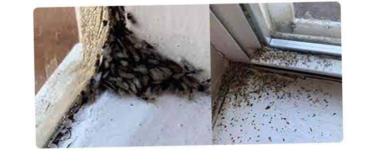 Termite Control Bulimba